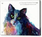 Colorful Watercolor Cat By Svetlana Acrylic Print