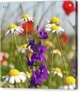 Colorful Wild Flowers Nature Scene Acrylic Print