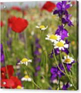 Colorful Wild Flowers Nature Spring Scene Acrylic Print