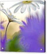 Colorfull Spring Acrylic Print