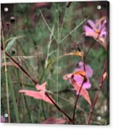Colorization Of Autumn Acrylic Print