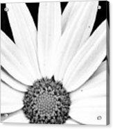Colorless Acrylic Print