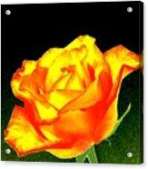 Colormax 4 Acrylic Print