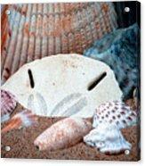 Colors From Sanibel Island Acrylic Print