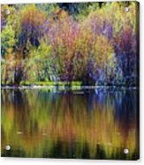 Colors Of Autumn In May Acrylic Print