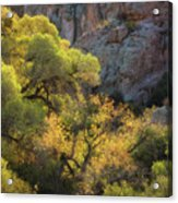Colors Of Autumn In The Sonoran  Acrylic Print