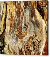 Colors Of Bark Acrylic Print