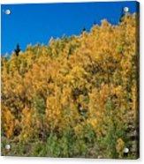 Colors Of Colorado  Acrylic Print