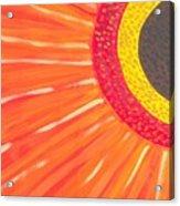 Colors Of Daisy Acrylic Print