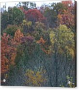 Color's Of Fall Acrylic Print