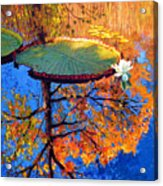 Colors Of Fall On The Lily Pond Acrylic Print