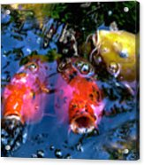 Colors Of Koi Acrylic Print