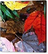 Colors Of The Fall Acrylic Print