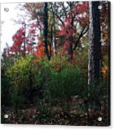 Colors Of The Forest Acrylic Print