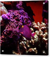 Colors Of Underwater Life Acrylic Print by Clayton Bruster