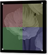 Colour Block Poppy Triptych Acrylic Print