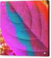 Colour Leaf Acrylic Print