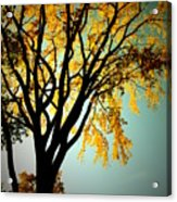 Colour Of The Fall Acrylic Print