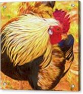 Colourful Hen Acrylic Print
