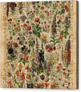 Colourful Meadow Flowers Over Vintage Dictionary Book Page  Acrylic Print