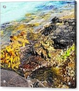 Colourful Sea Life - Fishers Point Acrylic Print