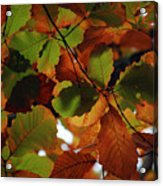 Colours Of Fall II Acrylic Print