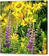 Columbia Gorge Wildflowers Acrylic Print