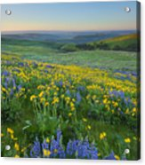 Columbia Hills Wildflower Dawn Acrylic Print