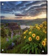 Columbia River Gorge Sunrise Acrylic Print