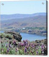 Columbia River Scenic Blooms #1 Acrylic Print