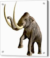 Columbian Mammoth Acrylic Print