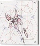 Columbine Flower Acrylic Print