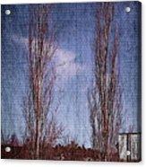 Column Aspen 2 Acrylic Print