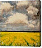 Colza Field Acrylic Print