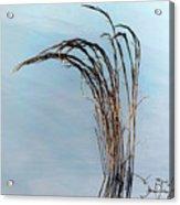 Combie Lake Reeds Acrylic Print