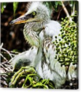 Come On Feathers Acrylic Print