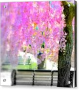 Come Sit By The Cherry Blossoms Acrylic Print