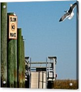 Coming In For The Landing Acrylic Print