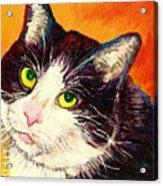 Commission Your Pets Portrait By Artist Carole Spandau Bfa Ecole Des Beaux Arts  Acrylic Print