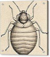 Common Bedbug, Cimex Lectularius Acrylic Print