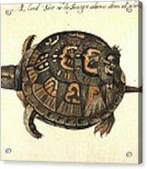 Common Box Tortoise, 1585 Acrylic Print