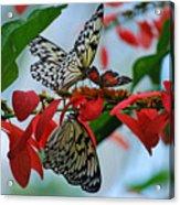 Community Flowers Acrylic Print
