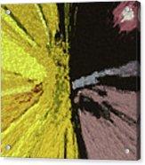 Competing Suns Acrylic Print