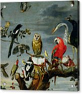 Concert Of Birds Acrylic Print by Frans Snijders