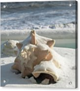Conch Shell In Snow Acrylic Print