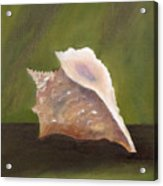 Conch Shell Acrylic Print by Shirley Lawing