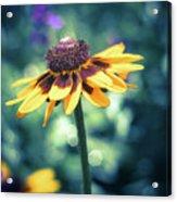 Cone Flower 2 Acrylic Print