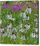 Cone Flower Fairy Dance Acrylic Print