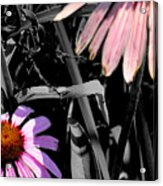Cone Flower Tapestry Acrylic Print