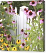 Cone Flowers And Fence Acrylic Print